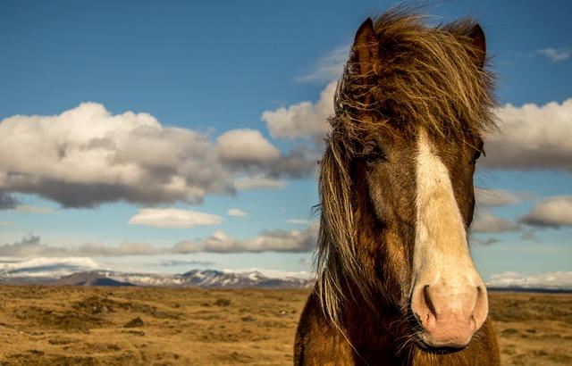 horse-881683_640